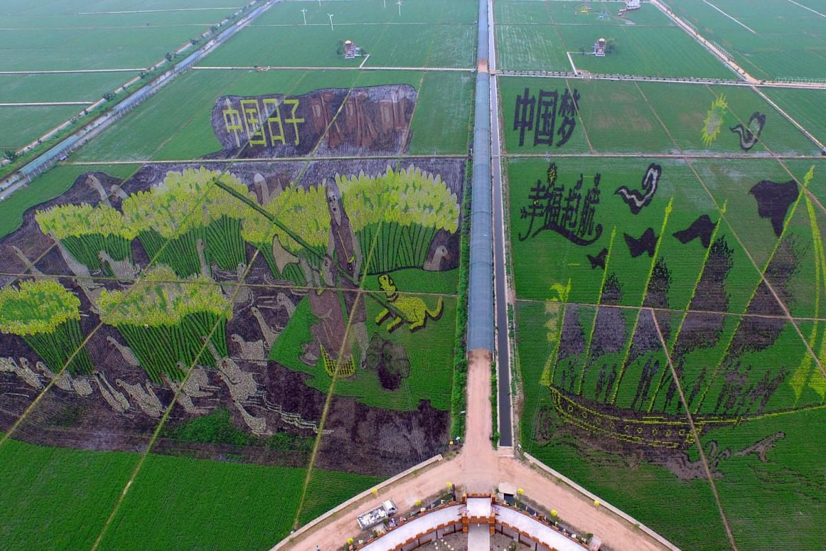 A general view of a 3D plantation in a paddy field in Shenyang, the capital of the Liaoning province, China on June 25, 2015.