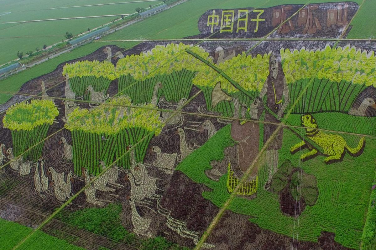 A general view of a 3D plantation in a paddy field in Shenyang, the capital of the Liaoning province, China on June 25, 2015. -