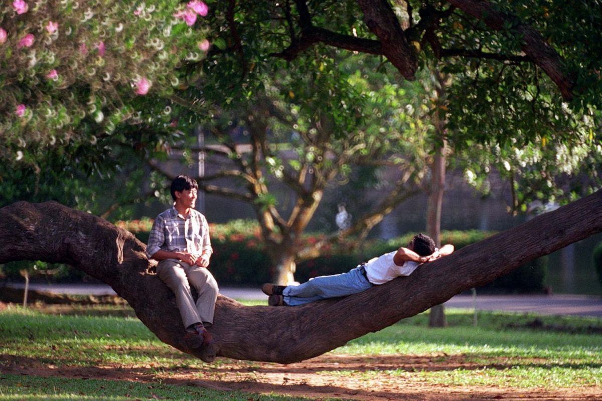 Two friends resting on a tree branch at the Botanic Gardens.