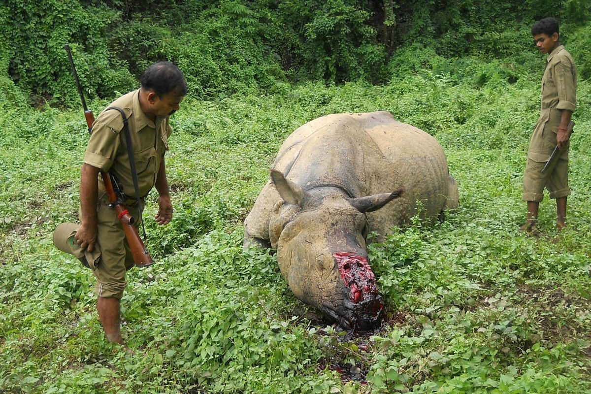 Indian forestry officials standing near the carcass of a one-horned rhinoceros which was killed and de-horned by poachers in Burapahar, a range of the Kaziranga National Park, some 250km east of Guwahati on June 29, 2015. Illegal rhino horn trade is