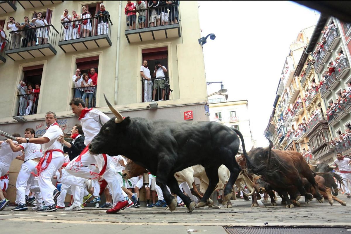 """Participants run in front of Del Tajo la Reina's bulls during the second """"encierro"""" (bull-run) of the San Fermin Festival in Pamplona, northern Spain, on July 8, 2015. The festival is a symbol of Spanish culture that attracts thousands of tourists."""