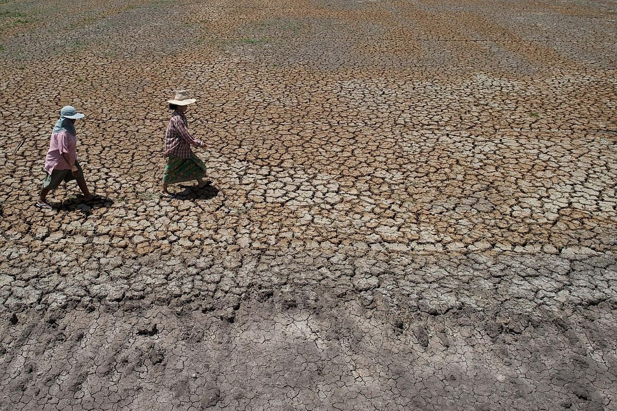 Thai farmers walking across a dried-out field in Bang Pla Ma district, Suphanburi province, a two-hour drive north of Bangkok on July 2, 2015.
