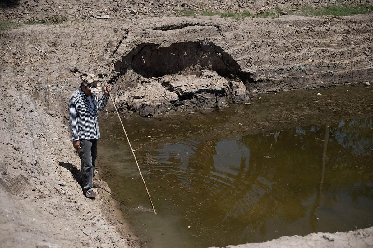 A Thai farmer looking at a nearly dried out farm pond, which is normally full, in Bang Pla Ma district, Suphanburi province.