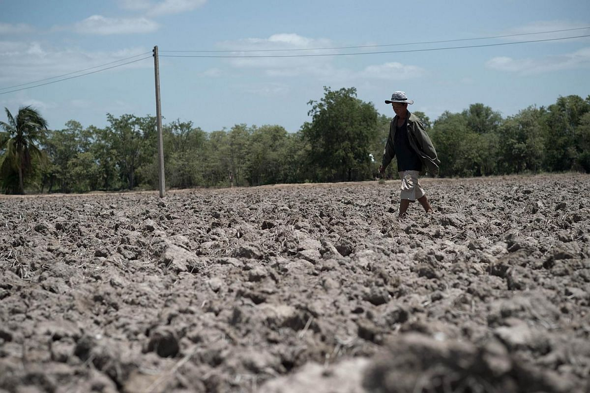 A Thai farmer walking in a dried-out field, in Bang Pla Ma district, Suphanburi province on July 2, 2015.
