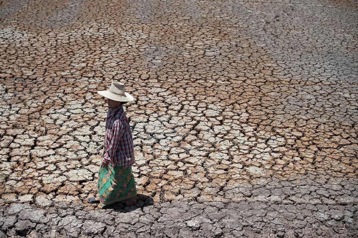 A Thai farmer walking on a dried-out field in Bang Pla Ma district, Suphanburi province.