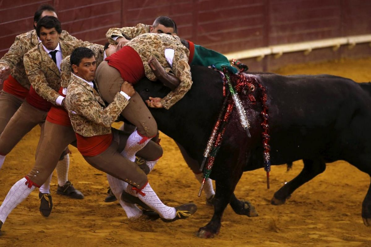 Members of the Ribatejo forcados group perform during a bullfight at Campo Pequeno bullring in Lisbon, Portugal July 9, 2015. Forcados are traditional Portuguese bullfighters who catch bulls with their bare hands.