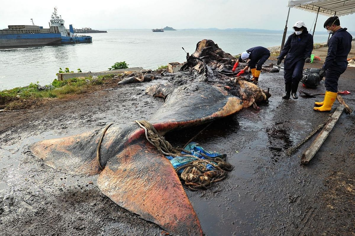 On Monday, the fourth day after the sperm whale's carcass was found, part of the skeleton can be seen.