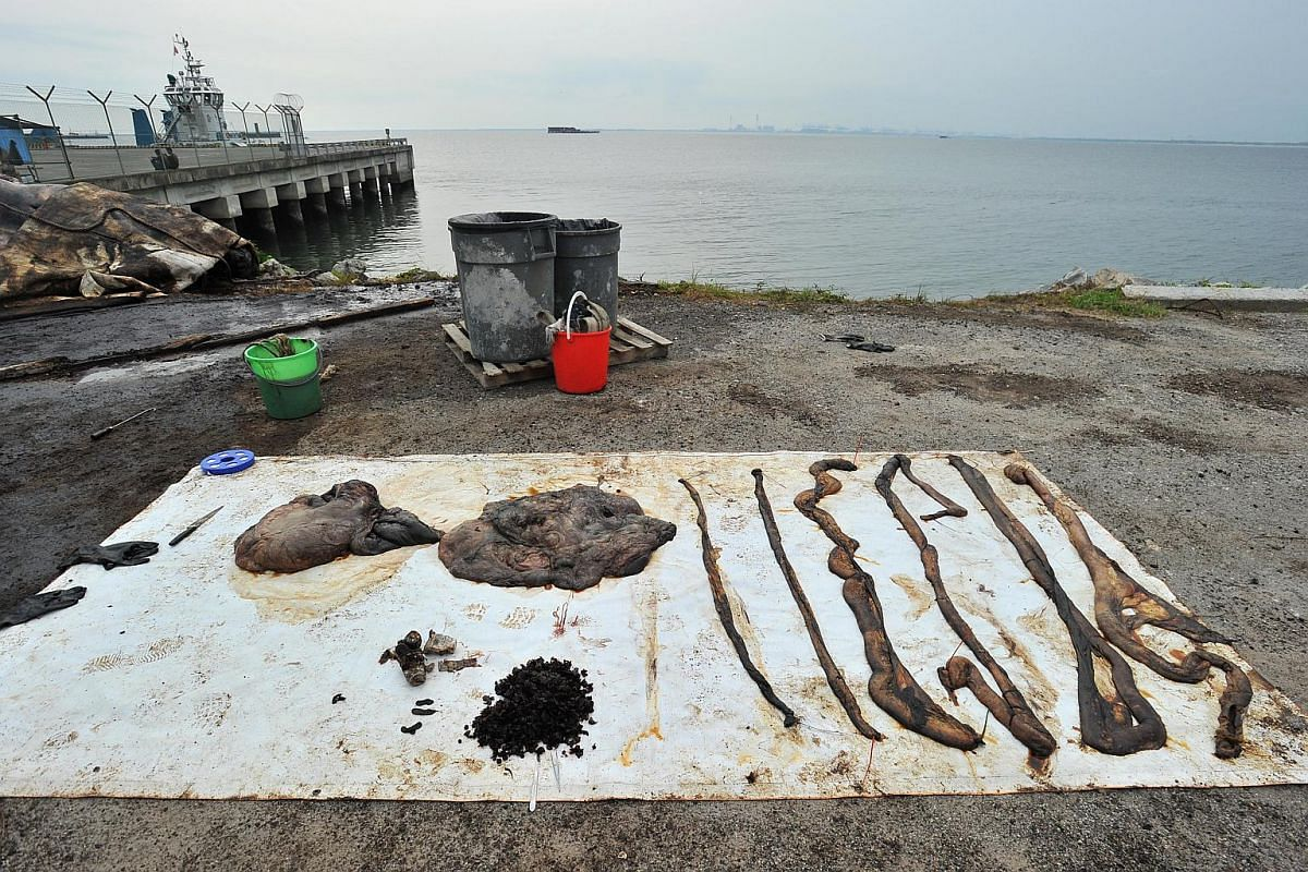 The insides of the dead sperm whale displayed on a canvas sheet at Tuas Marine Transfer Station on July 12. (From left) Upper and lower stomach, marine plastic trash, squid beaks and intestines.