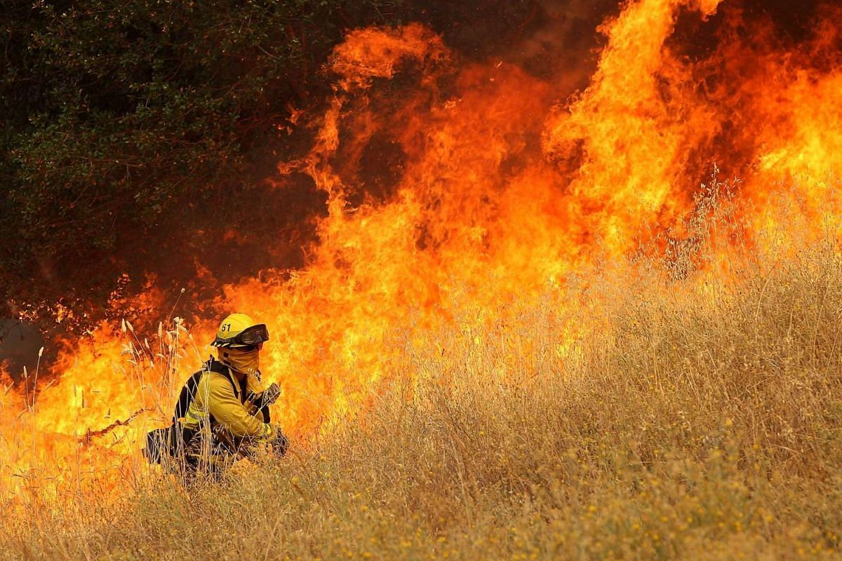 A firefighter from Windsor, California, walks next to a wall of flames as he starts a back fire in tall dry grass while battling the Rocky Fire on July 30, 2015 in Lower Lake, California.