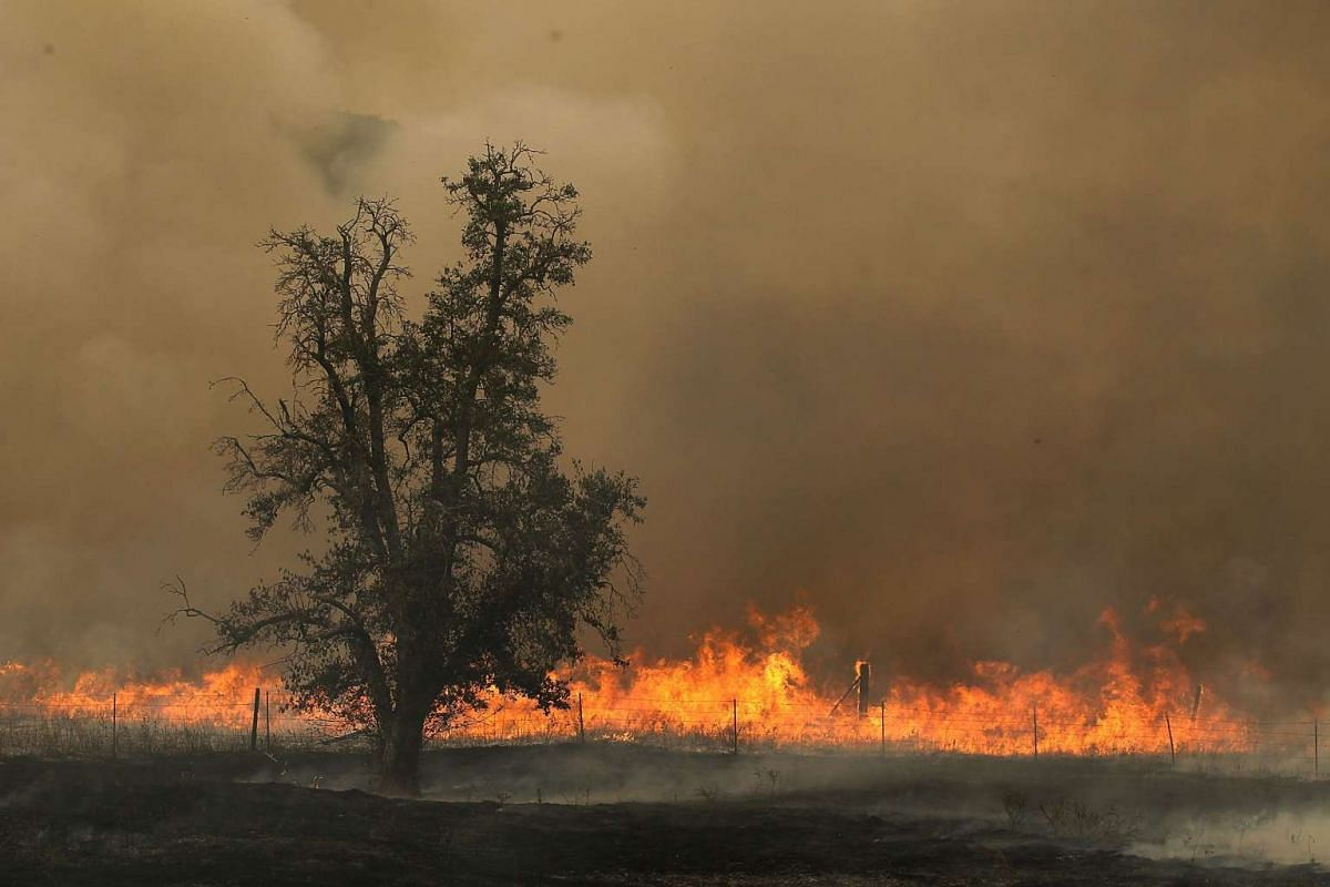 Flames from the Rocky Fire burn through a field on July 30, 2015 in Lower Lake, California.