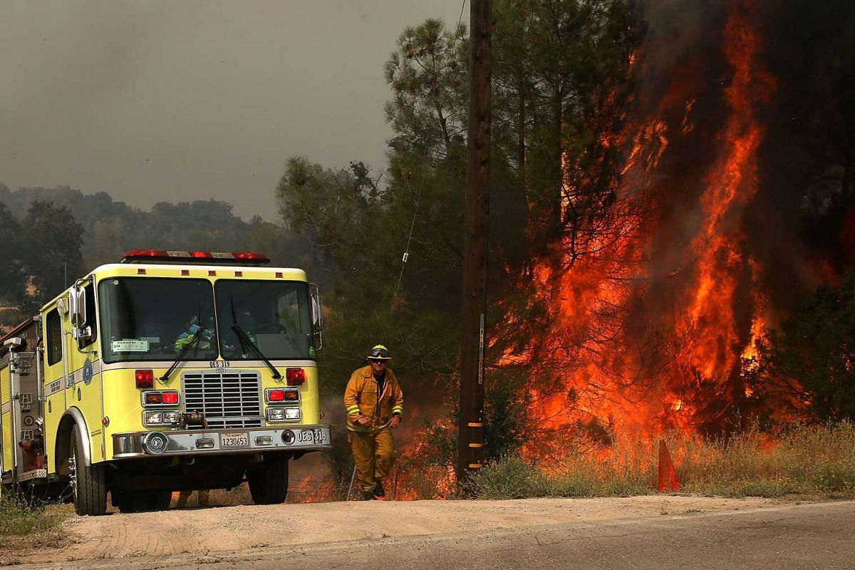 A San Francisco firefighter gets out of the way as a tree goes up in flames while battling the Rocky Fire on July 30, 2015 in Lower Lake, California.
