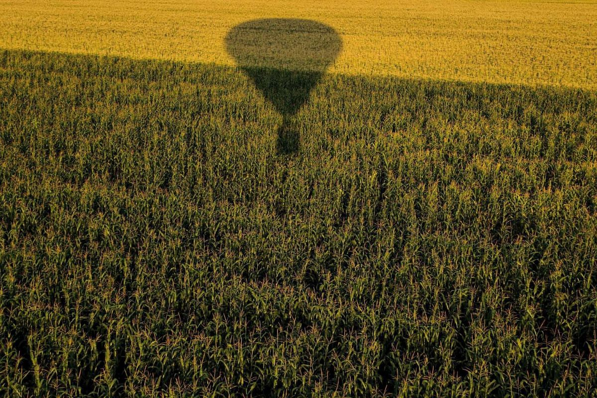 The shadow of a hot air balloon is cast on a field during the 19th FAI Hot Air Balloon European Championship in Debrecen, Hungary, on Aug 12.