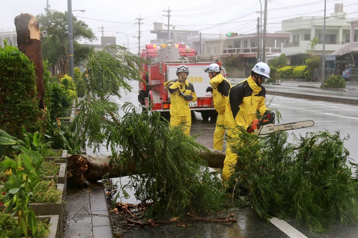 Firefighters try to remove a fallen tree at a road in Kadena, in the Japanese southwestern island of Okinawa, Japan, Aug 24, 2015.