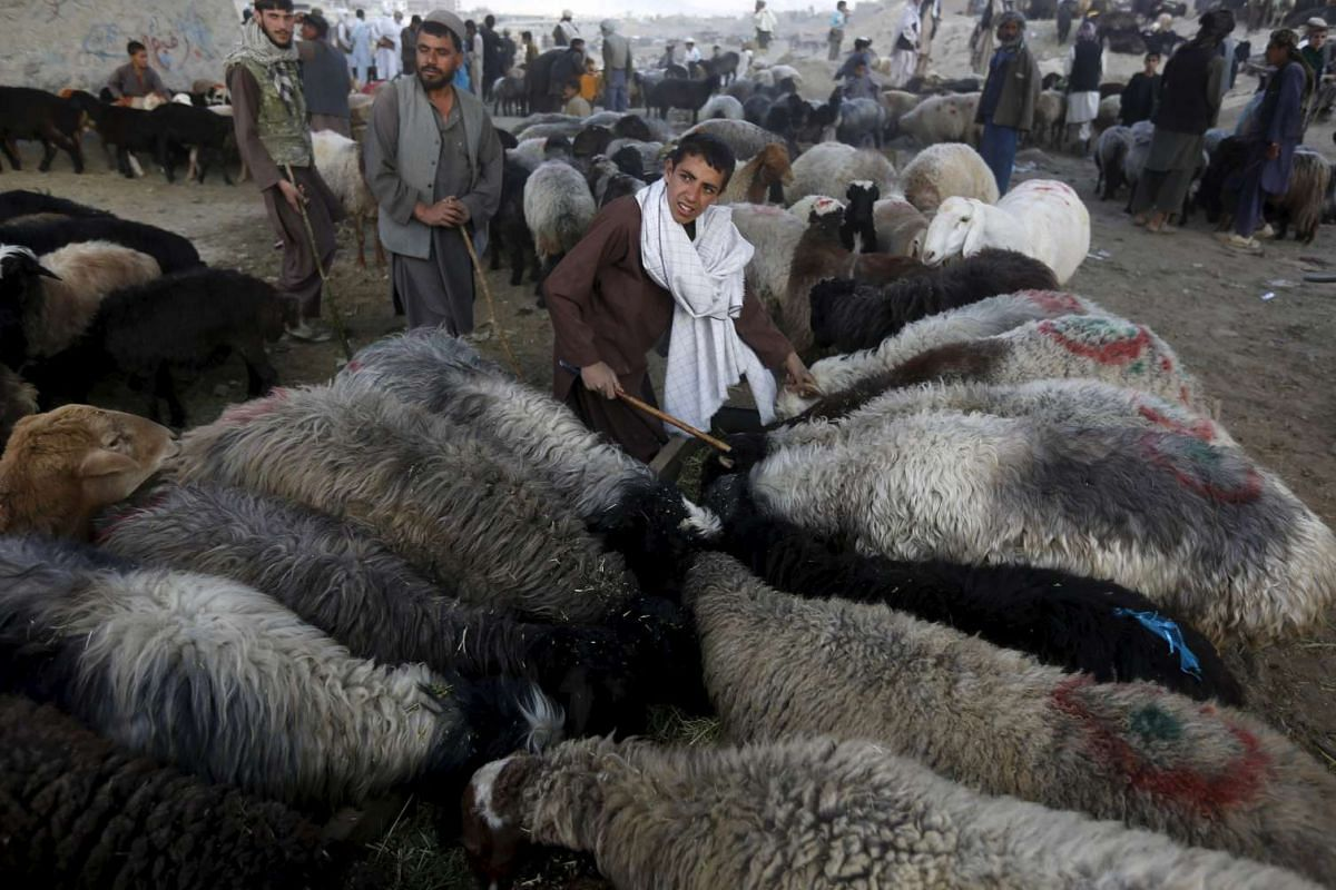 A vendor talking with customers at a livestock market ahead of the Eid al-Adha in Kabul on Sept 22, 2015.