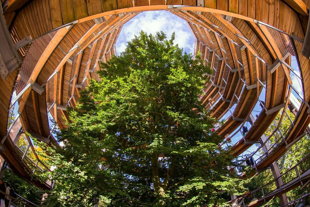 People visiting the 40m-high observation centerpiece of the 1,250m-long tree-top path in Prora, Germany. The beech forest on the island of Ruegen opened a Heritage Centre open with the tree observation tower in the shape of an eagle eyrie in 2013. Ab