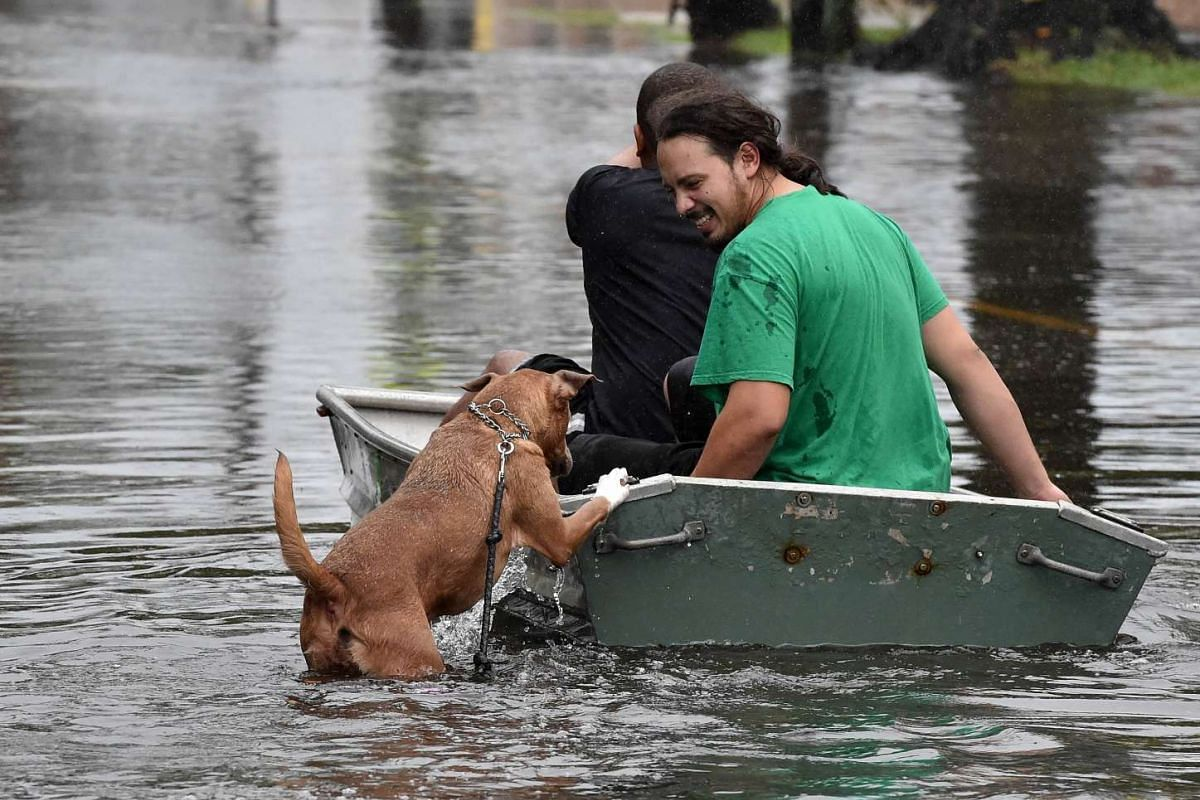 A dog trying to get on a boat carrying two men down a flooded street in Charleston, South Carolina, on Oct 4, 2015.