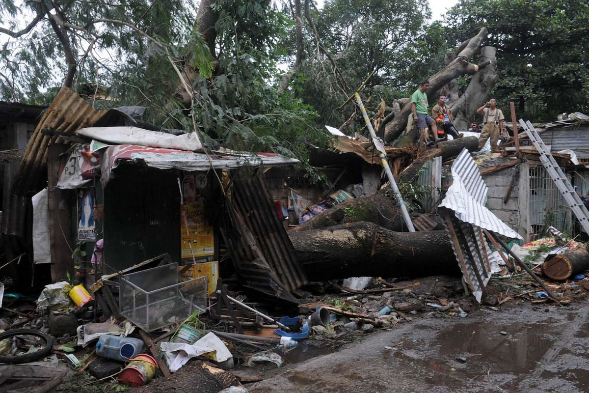 Fire volunteers and workers clearing a fallen tree in Manila on Oct 19, 2015, after it toppled on Oct 18 and crushed a house, killing a 14-year-old boy, and injuring four others.