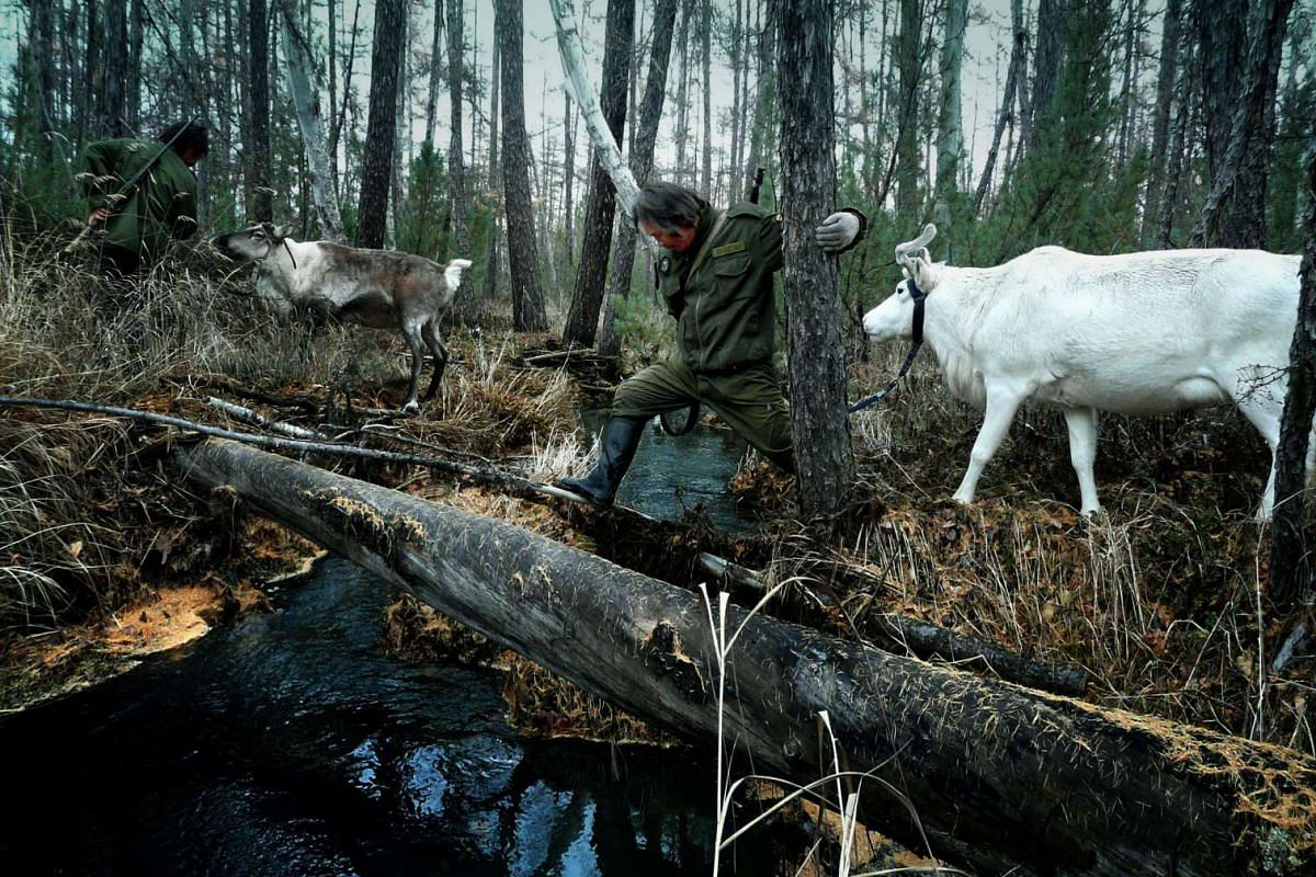 Also to be screened is The Last Moose Of Aoluguya (2013, above) by Chinese documentary-maker Gu Tao.