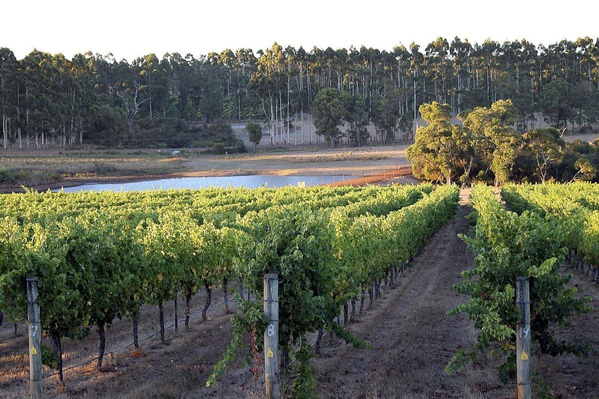 The vineyards (top) and wide open spaces of the Margaret River Region draw wine expert Ch'ng Poh Tiong (above).