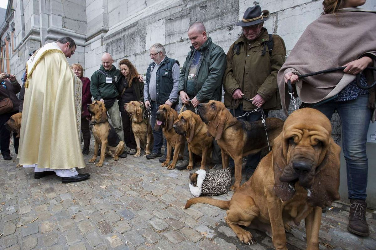 Belgian priest Philippe Goosse (left) blessing Bloodhound dogs during a religious and blessing ceremony for animals, outside the Basilica of St Peter and Paul in Saint-Hubert, Belgium, on Nov 3, 2015.