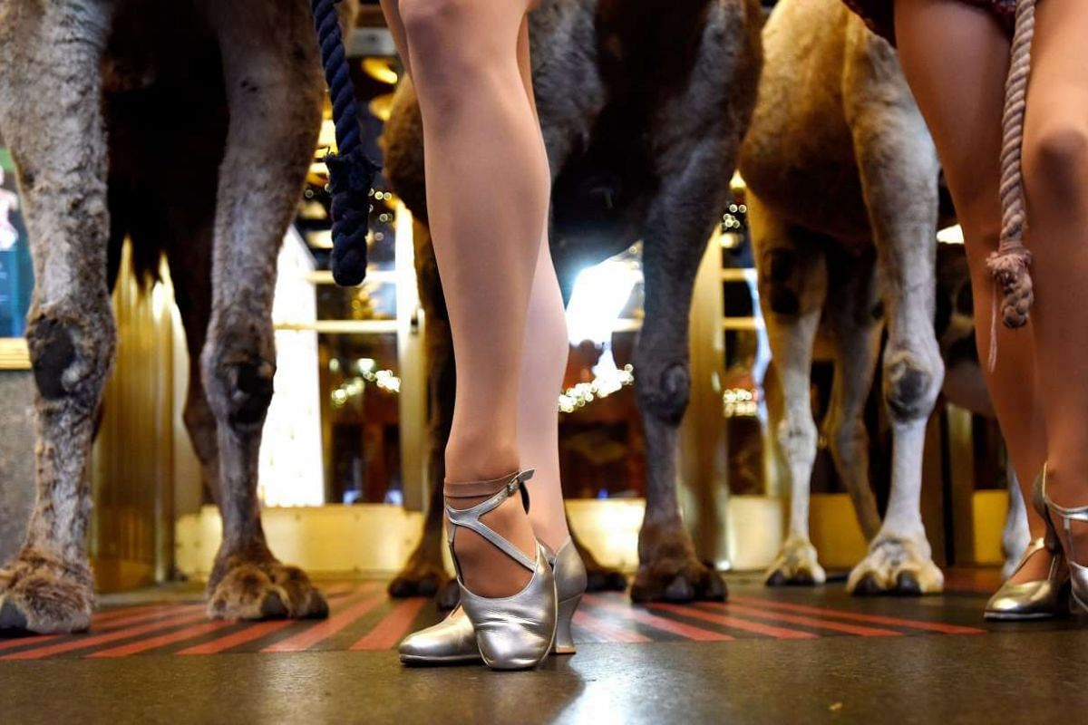 Members of the Rockettes pose with camels in front of Radio City Music Hall as the animals arrive for the first day of rehearsals.