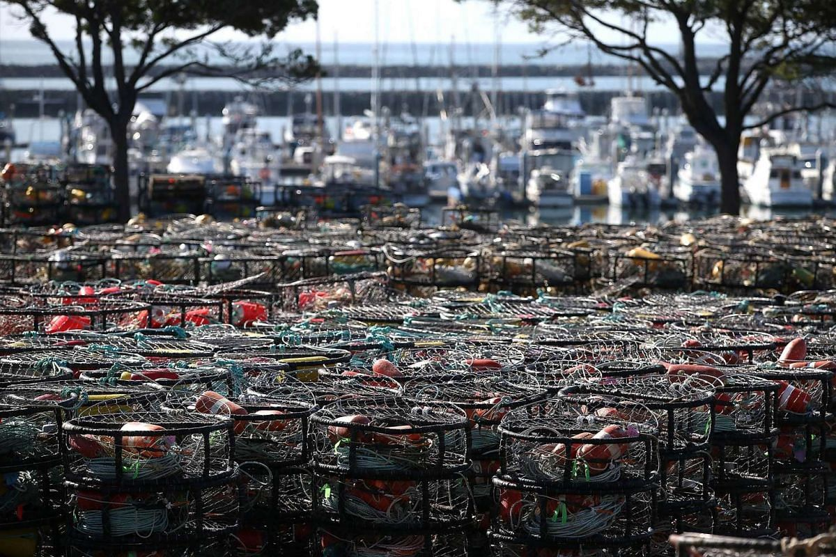 Hundreds of crab traps sit in the parking lot of the Pillar Point Harbor on Nov 5, 2015, in Half Moon Bay, California.