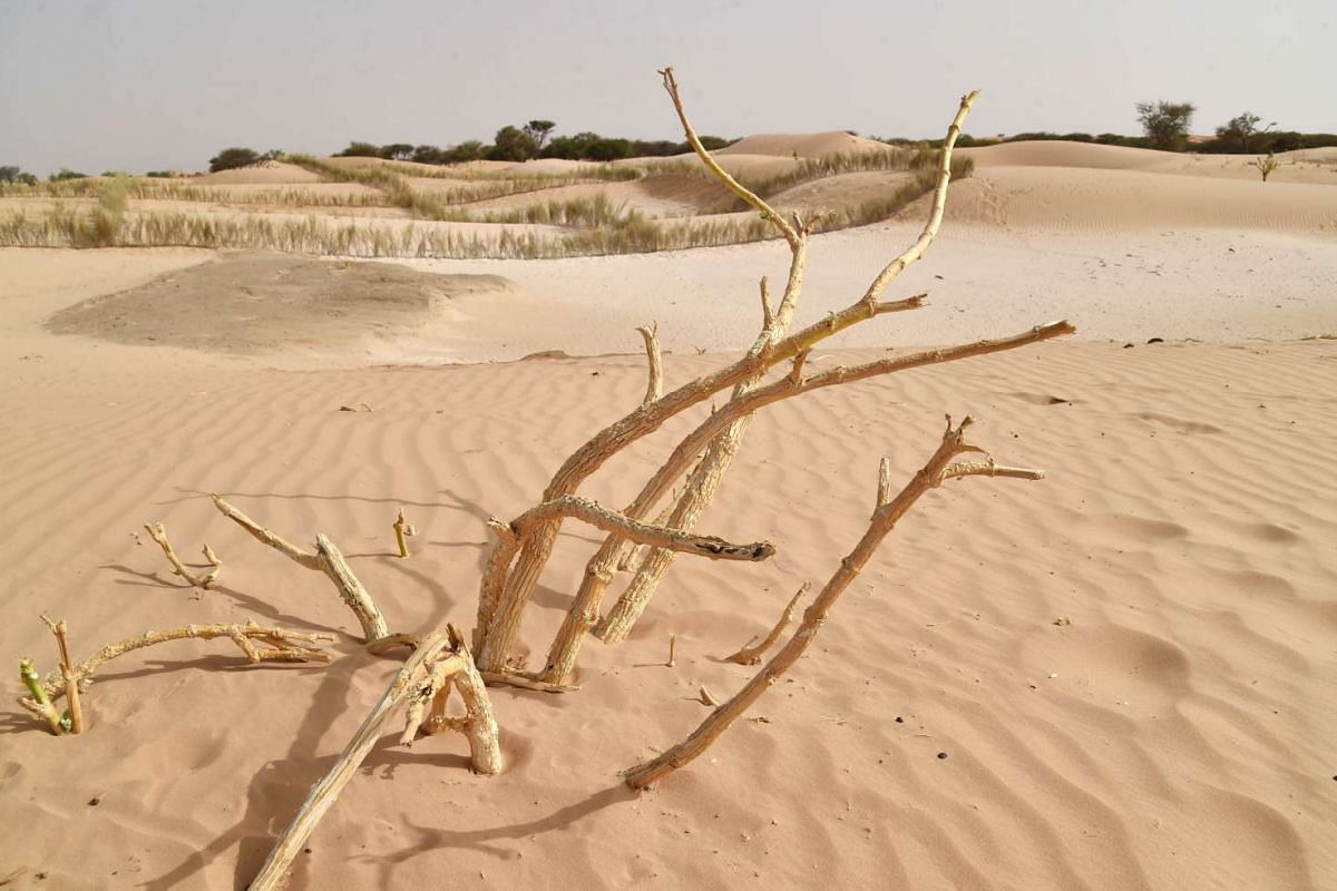 A picture taken on May 26, 2015 in the countryside near the southeastern town of Diffa in Niger, shows fixed dunes. Climate change has wreaked havoc in Niger, bringing floods, droughts, spikes in temperature and food shortages -- buffeting the lives