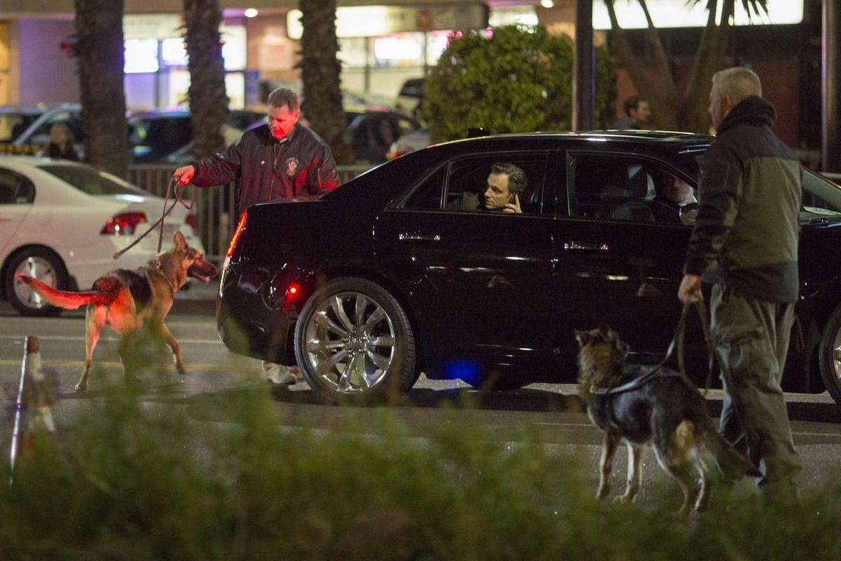 A red carpet guest watching as bomb-sniffing dogs investigate the car that he is riding in to the arrivals area for the premiere of Star Wars: The Force Awakens.