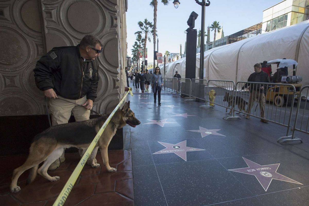 Bomb-sniffing dogs sweeping areas along Hollywood Boulevard before the premiere of Star Wars: The Force Awakens.