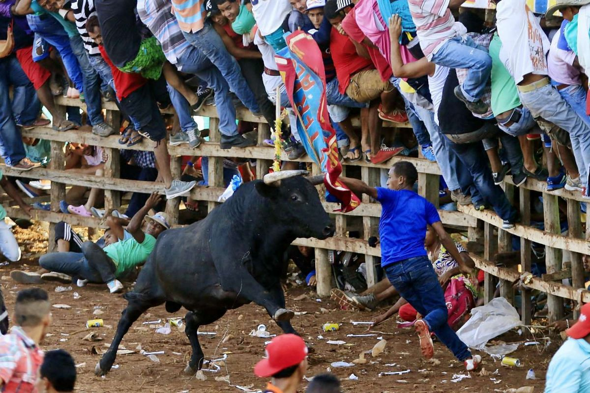 """People participating in a """"corraleja"""" (traditional amateur bullfight) in Turbaco, near Cartagena in Colombia on Jan 3, 2016."""
