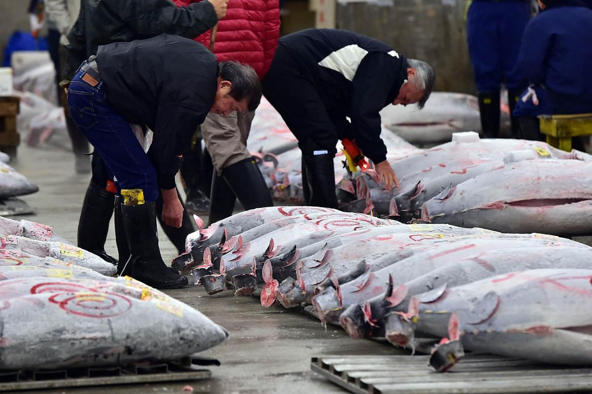 Fishmongers inspecting frozen bluefin tuna before the first auction of the new year at Tokyo's Tsukiji fish market.