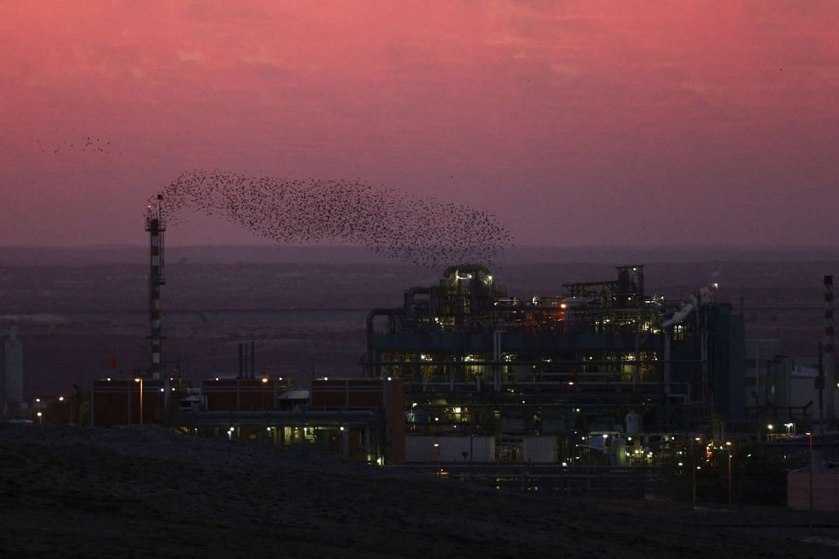 Migrating starlings flying across the sky in southern Israel on Dec 28, 2015.