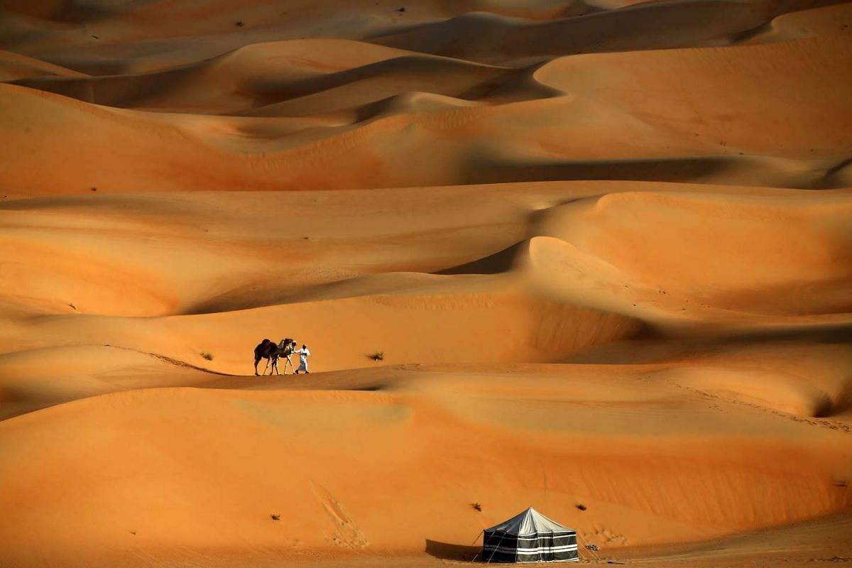A man walking his camels across the Liwa desert in Abu Dhabi, during the Liwa 2016 Moreeb Dune Festival on Jan 5, 2016.