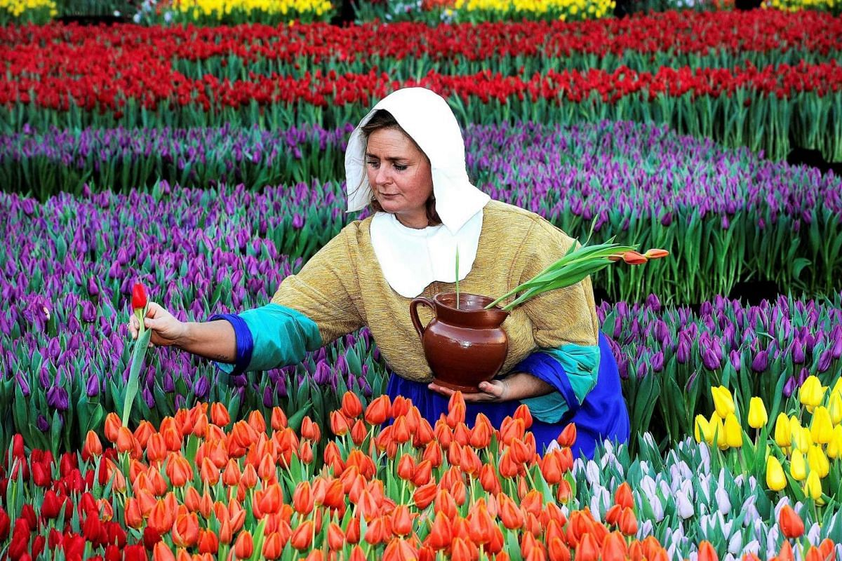 A woman dressed as The Milkmaid (Het Melkmeisje), after a painting by Dutch painter Johannes Vermeer, picking up tulips at the Dam, Amsterdam, on National Tulip Day, Jan 16, 2016.