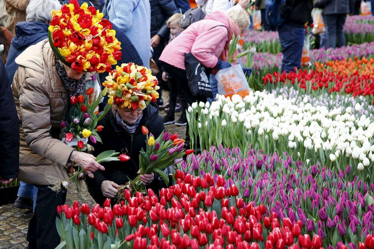 People picking up tulips in front of the Royal Palace at the Dam Square on National Tulip Day to celebrate the beginning of the tulip season in Amsterdam, the Netherlands, on Jan 16, 2016.