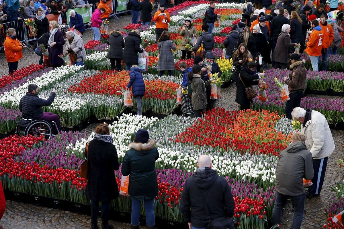 People picking tulips that were placed in front of the Royal Palace at the Dam Square to celebrate National Tulip Day in Amsterdam, the Netherlands, on Jan 16, 2016.