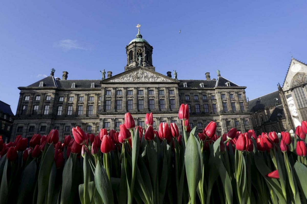 Tulips are seen in front of the Royal Palace at the Dam Square to celebrate the beginning of the tulip season in Amsterdam, the Netherlands, on Jan 16, 2016.