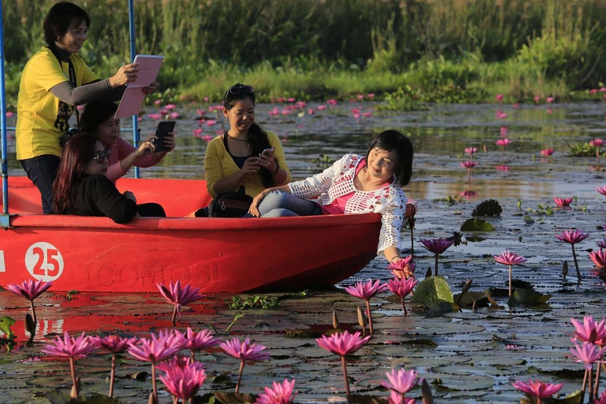 Tourists on boats posing for photos on the pink-red toned lotus and water lily covered Nong Harn Lake, in Udon Thani province, north-east Thailand, on Jan 17, 2016. PHOTO: EPA