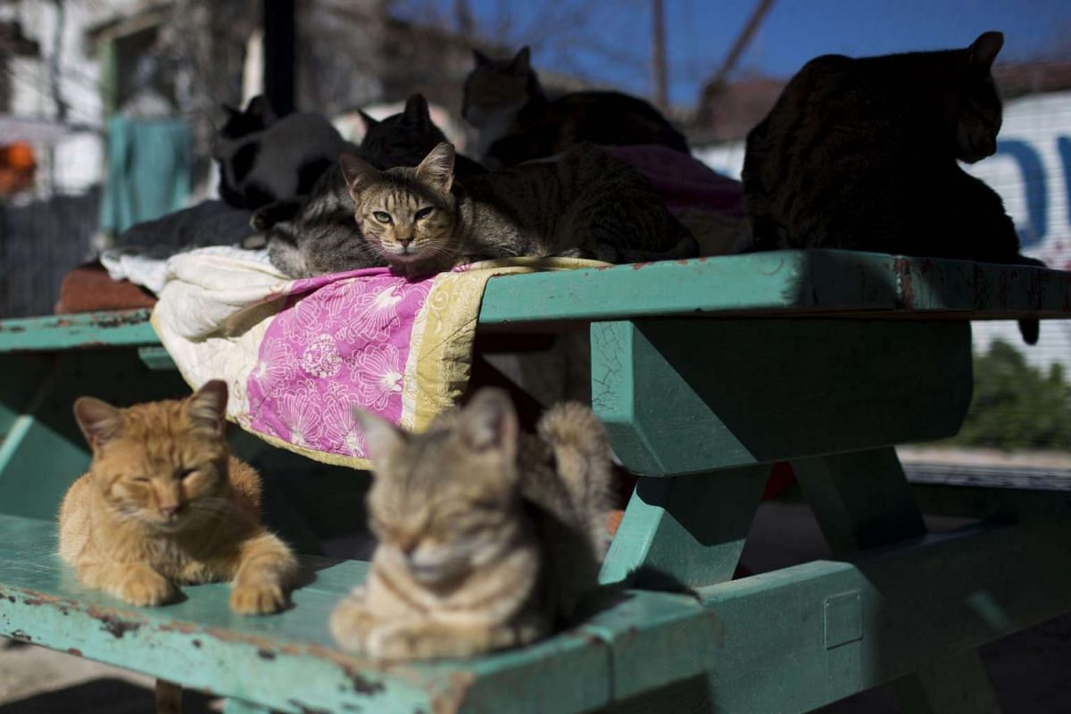 Street cats rest in the shelter house for feral cats at the SPCA in Jerusalem, Israel.