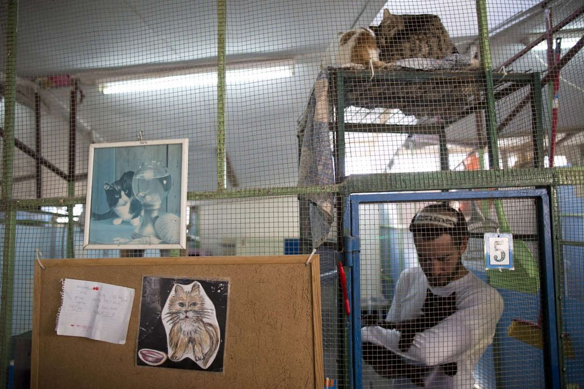 A volunteer treats a cat in the shelter house for feral cats at the SPCA in Jerusalem, Israel.