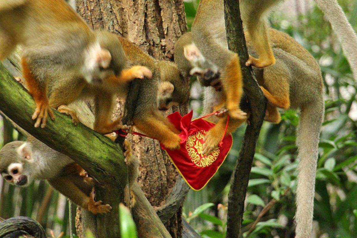 Two squirrel monkeys seem to be squabbling over who gets the new bag of treats.