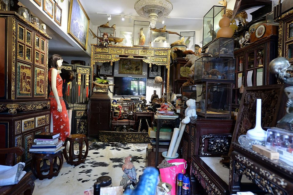 A model of an arowana fish gives visitors an idea of the Aladdin's cave that is home to Mr Cheong and his family. The semi-retired towkay's large - and growing - collection includes things long dead and very much alive. A life-size Frankenstein figur