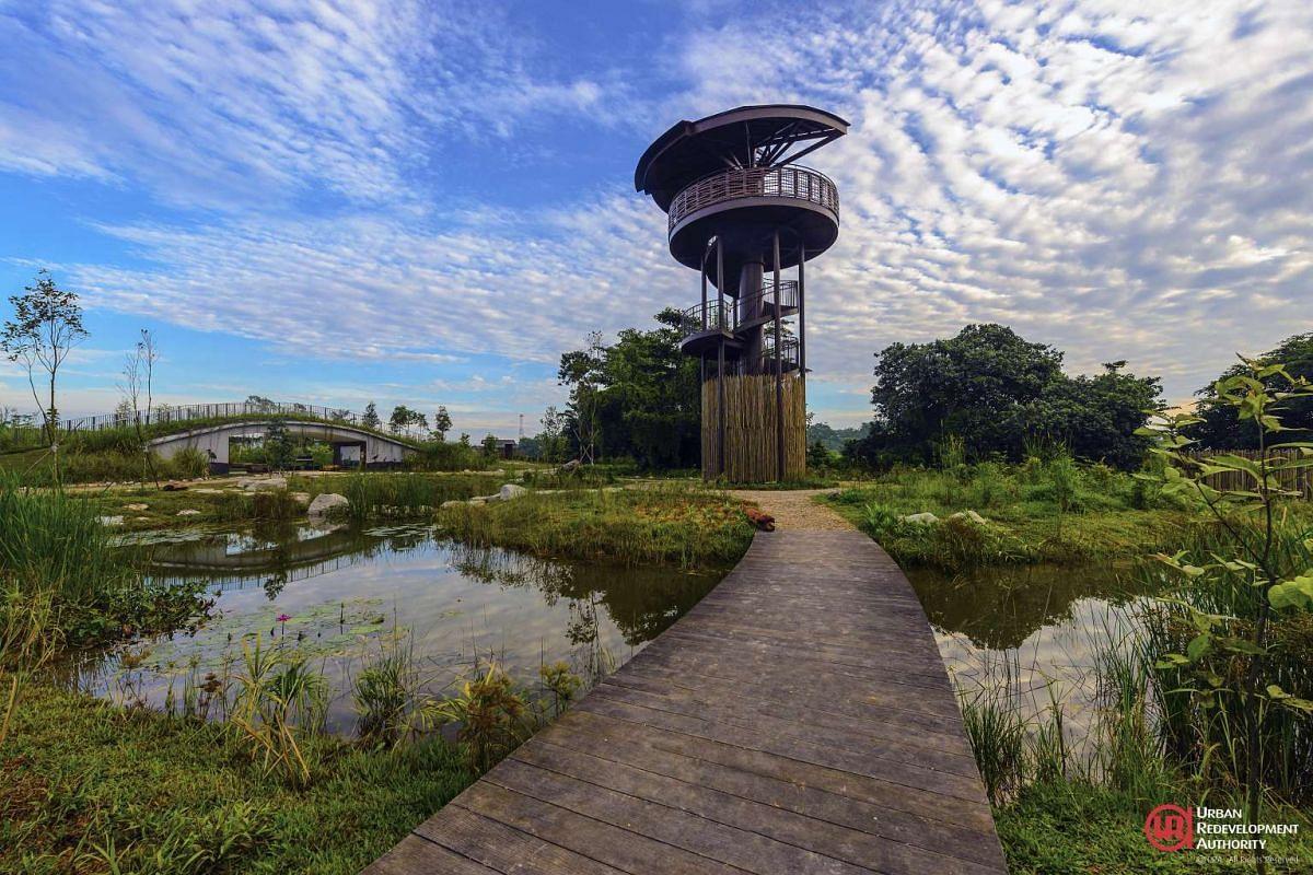 Raptor Tower at Kranji Marshes.