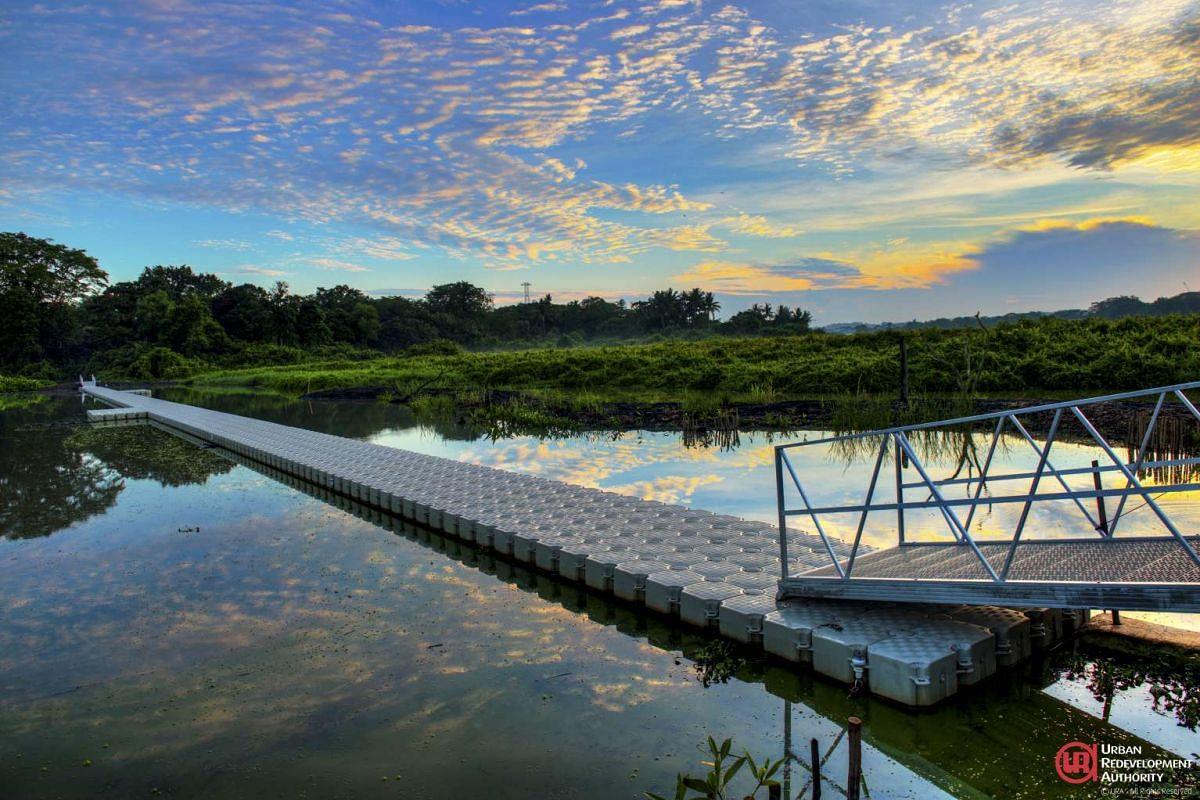 Reed Crossing at Kranji Marshes.