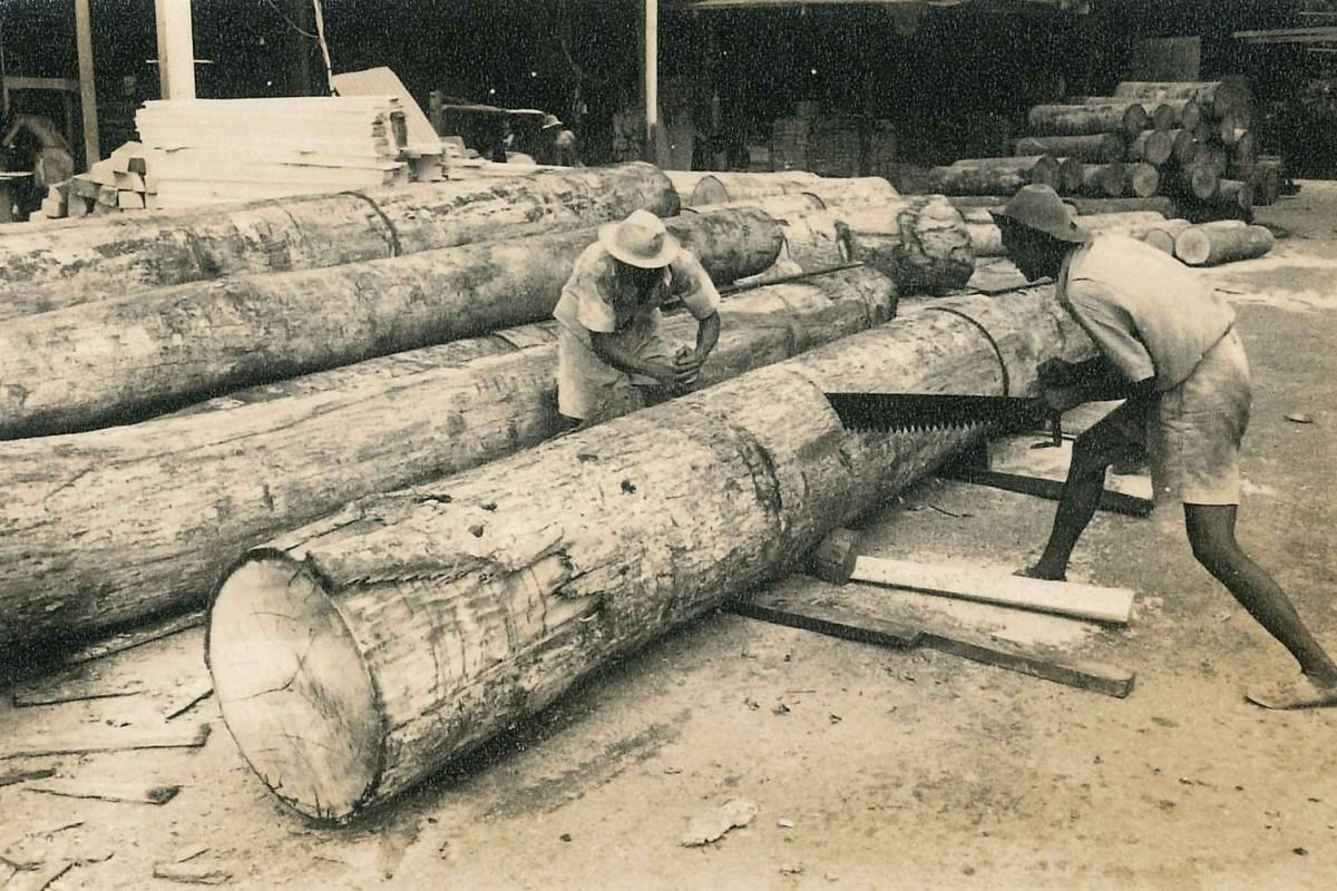 Workers sawing timber logs at the sawmill in the 1950s.