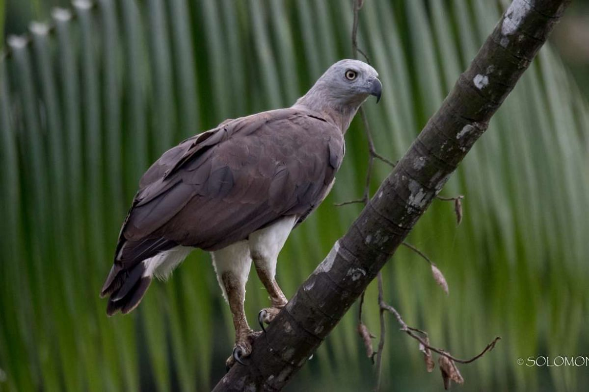 Signature bird species: Grey-headed Fish Eagle.