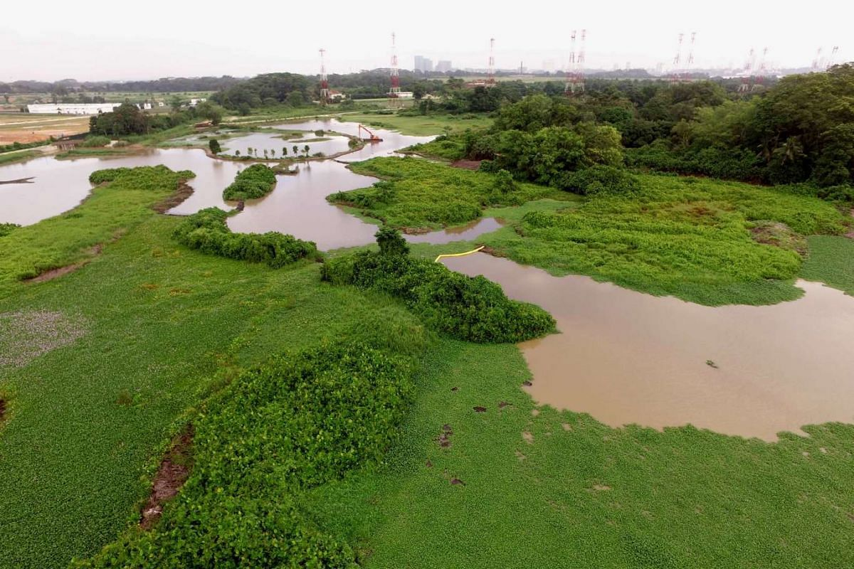 Aerial view of Kranji Marshes.