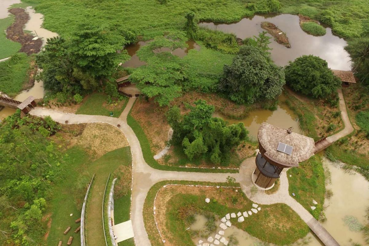 Aerial view of the Raptor Tower at Kranji Marshes.
