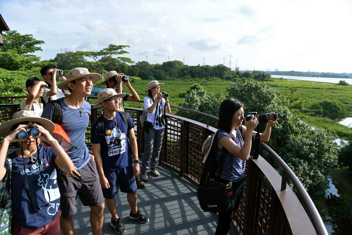 Visitors to the new 56.8 ha Kranji Marshes can climb the 10 metre tall Raptor Tower for a bird's eye view of the marshes.
