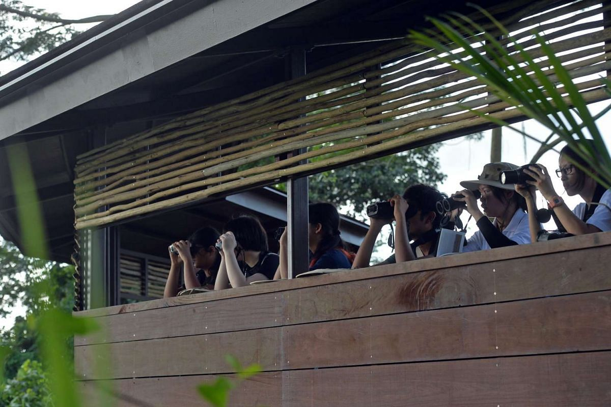 Nature lovers can choose from the many observation shelters in Kranji marshes to spot wildlife and some 170 species of birds. Here, some students take time off to spot wildlife at the Moorhen Blind.